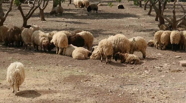 Hilvan'da hayvan otlatma kavgası, 1 Ölü 1 Yaralı