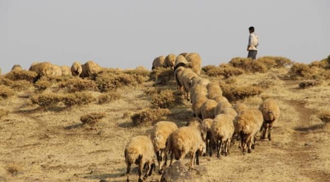 Karacadağ'da hayvancılık zor günler geçiriyor