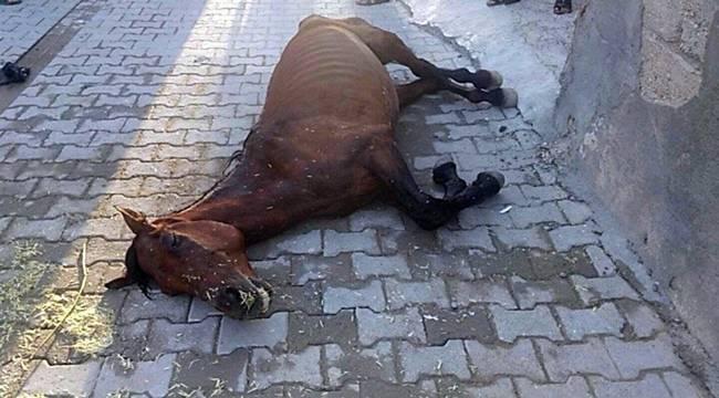 Suruç'ta At'ı ölüme terk ettiler