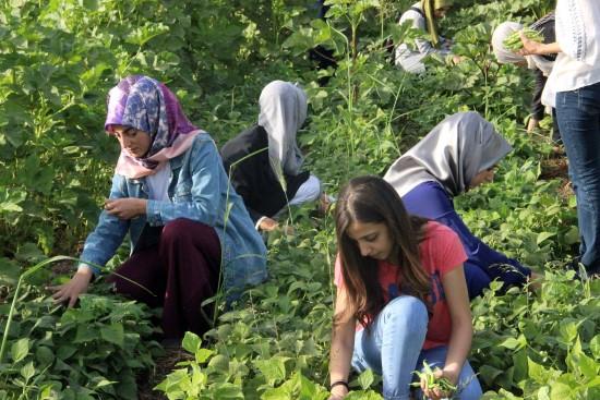 Üniversite öğrencileri kendi ektikleri sebzeleri satıyor