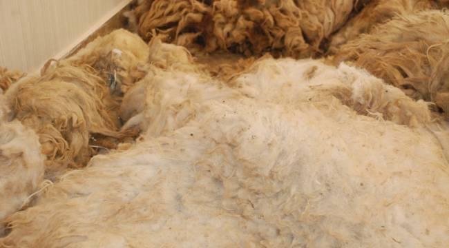 Urfa'da 150 Ton Yapağı Satıldı