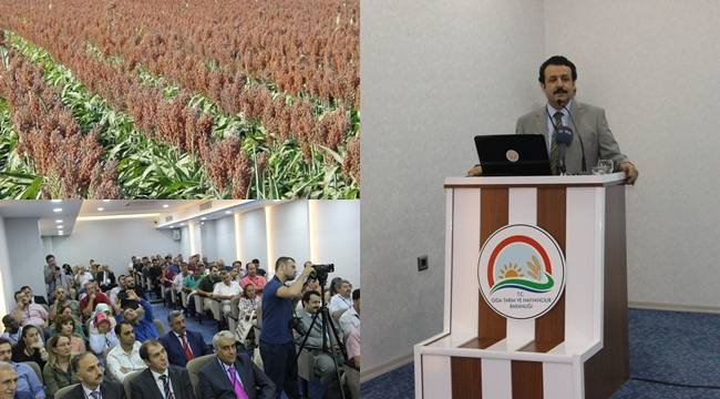 Urfa'da Enerji bitkileri ve sorgum çalıştayı yapıldı