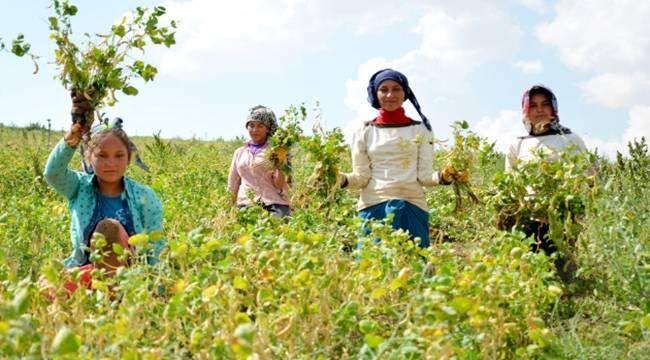Urfalı Tarım İşcileri Okula Gitmek İstiyor