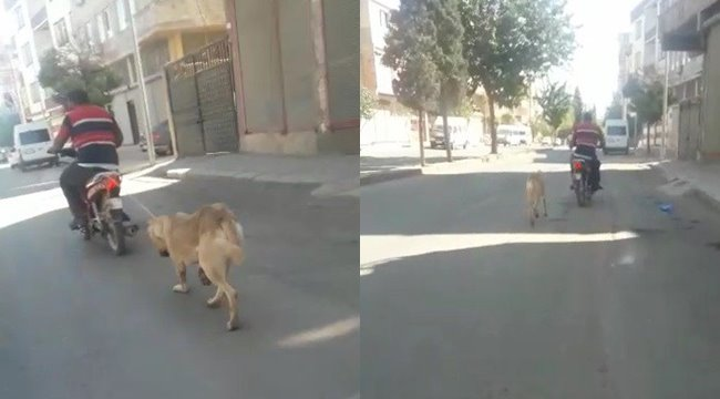 Köpeği motosikletin arkasına bağlayıp zorla götürdü