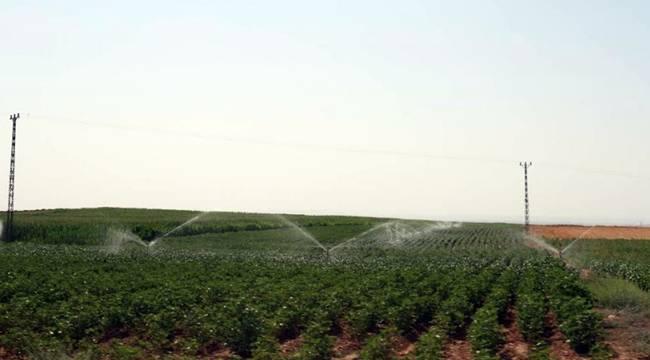 Şanlıurfa'da 500 Bin Dekar Arazi Suyla Buluşacak