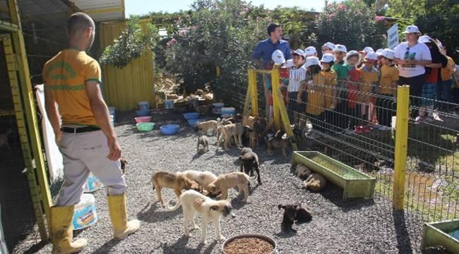 Urfa'da Dünya Hayvan Koruma günü etkinleri