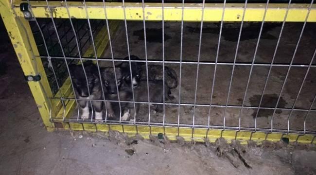 Viranşehir'de Sahipsiz Sokak Hayvanları Toplandı