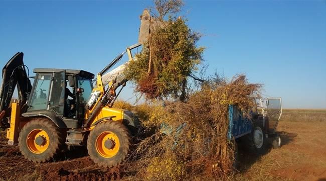 Bu Gidişi ile Suruç'ta Nar Kalmayacak, 970 Ağaç daha söküldü