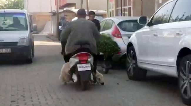 Kafası ve Kuyruğu Yere Sürtünen Koyunu Motorla Taşıdı