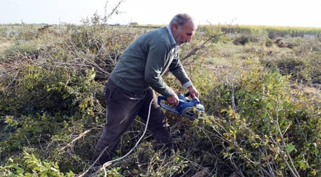 Para etmiyor dedi 1200 nar ağacını kesti - Videolu Haber