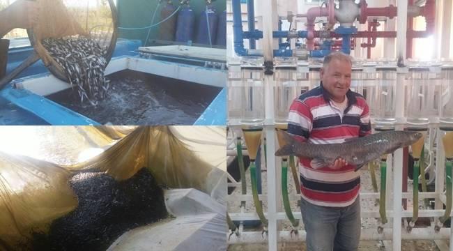 Şanlıurfa'nın Balıkları 13 Baraj Gölüne Bırakıldı