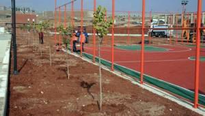 Urfa'da 2 Milyon Ağaç Ve Bitki Toprakla Buluşacak- Videolu Haber