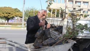 Urfa'da Fıstık Fidanları Dikilmeye Başladı