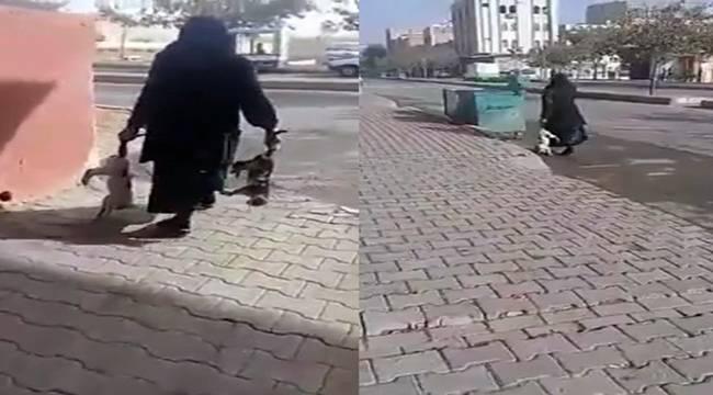 Urfa'da Yaşlı kadın zehirlediği kedileri çöpe attı- Videolu Haber