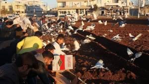 Çatıya Konan Güvercinler Ev Sahibinin Oluyor
