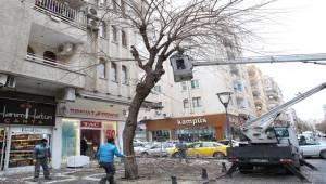 Haliliye'de ağaç bakım ve budama çalışmaları-Videolu Haber