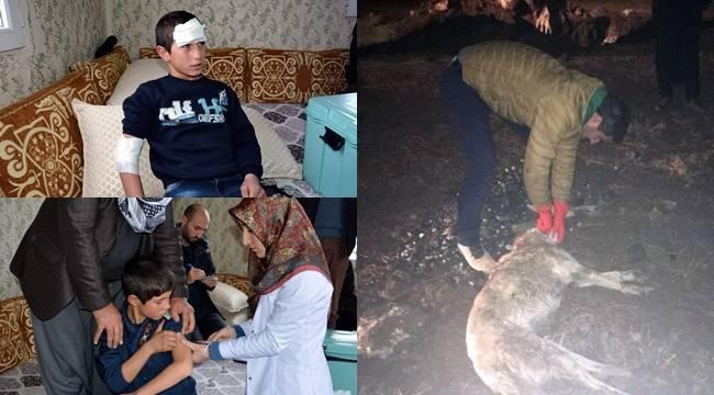 İki Çocuğu Isıran Köpek Kuduz Çıktı