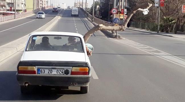 Otomobil'deki 2 Metrelik Ağaç Şaşkına Çevirdi