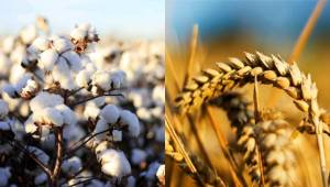 Şanlıurfa Çiftçisine Destekleme Müjdesi
