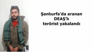Şanlıurfa'da aranan DEAŞ'lı terörist yakalandı