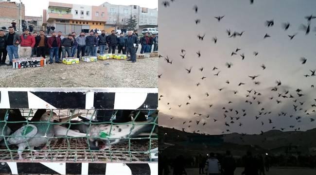 Urfa Semalarına Güvercinler Döküldü-Foto Galerili Haber