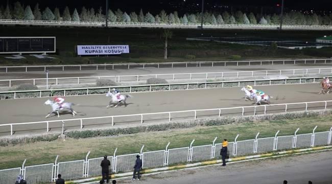 Safkan Arap Atları Haliliye Belediyesi İçin Koştu-Videolu Haber