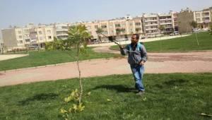 Haliliye'de Bitki Zararlıları ile Mücadele Ediliyor-Videolu Haber