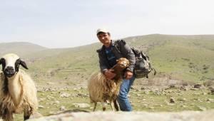 Sosyal Medyada Dikkat Çeken Çoban Konuştu-Videolu Haber