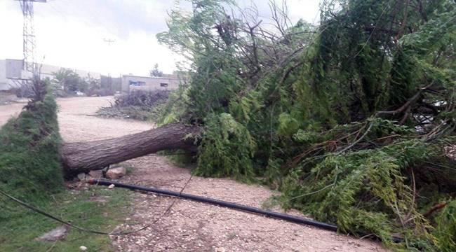 Şiddetli Rüzgar Ağaçları Söktü