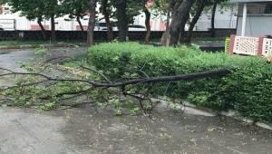 Siverek'te Fırtına Ağaçları Devirdi