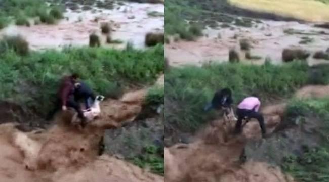 Sele kapılan koyunun kurtarılma anı kamerada