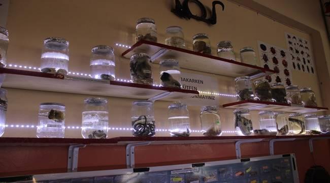 Siverek'te Biyoloji Müzesi Kuruldu