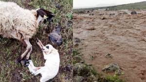 Siverek'te şiddetli yağışta hayvanlar telef oldu