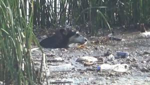 Fırat Nehri'ne 2 Köpek Düştü