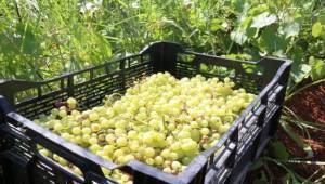 Şanlıurfa Büyükşehir'den Meyve İkramı
