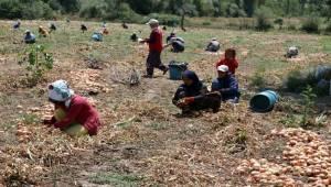 Ekmeklerini Topraktan Çıkartıyorlar