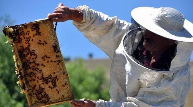 Urfa'da Ne Kadar Bal Üretiliyor