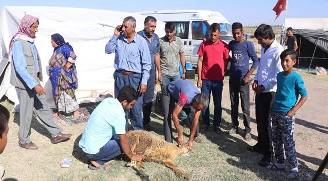 Urfalı Tarım İşçileri Çadırda Kurban Kesti