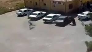 Harran'daki Kan Davası Cinayeti Kamerada