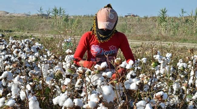 Pamuk Üretimi Tüketimi Karşılamıyor