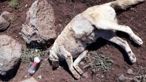 10 Sokak Köpeği Ölü Bulundu