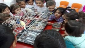 Anaokulu Öğrencileri Hayvanları Tanıdı
