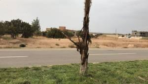 Ceylanpınar'da Parklara Zarar Verildi