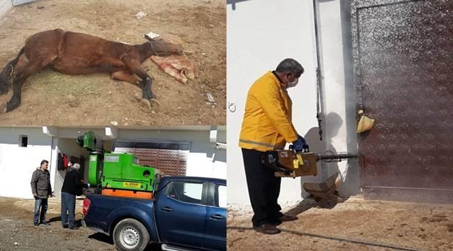 Milyonluk At Ölümleri Sonrası İlaçlama Yapıldı