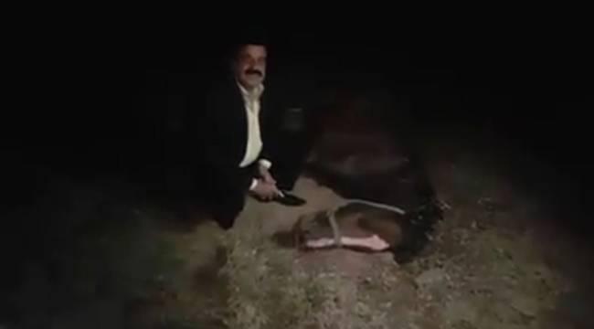 Urfa'da Milyonluk Yarış Atları Ölüyor