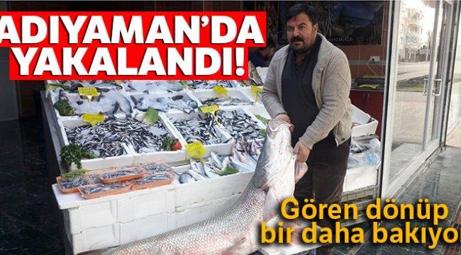 Atatürk Barajında Turna Balığı Yakalandı