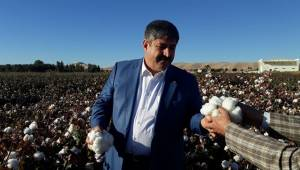 Başkan Eyyüpoğlu'ndan Pamuk Çiftçisine Müjdeli Haber
