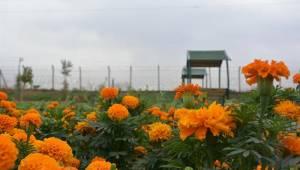 Ceylanpınar'da Yeşil Alanların Sayısı Artıyor