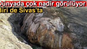 Dünyada örneği az, biri de Sivas'ta