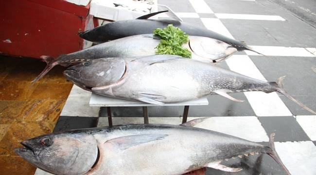 Şanlıurfa'da Ton Balıklarına Yoğun İlgi